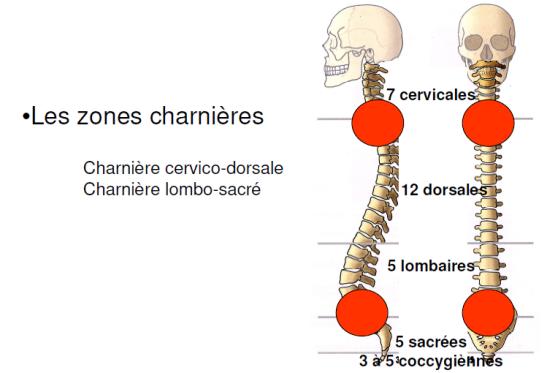 Les sièges de TMS sur la colonne vertébrale